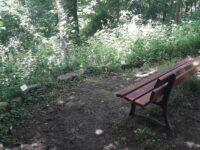 Sentier botanique de Coye-la-Forêt